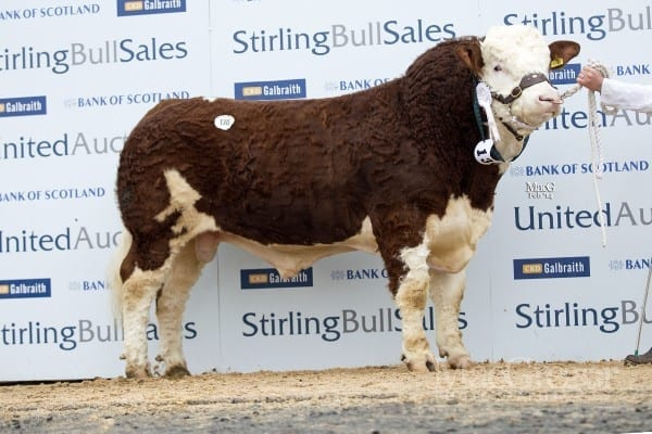 Lot 130 Ryder Darthvader, sold for 10,000gns to Macfarlane, Quixwood Farm, Duns