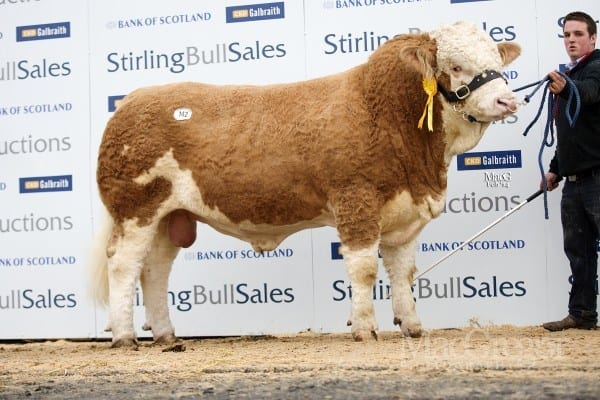 Lot 142 Denizes Dictator, sold for 10,000gns to SB Morrison, Easter Urray, Muir Of Ord