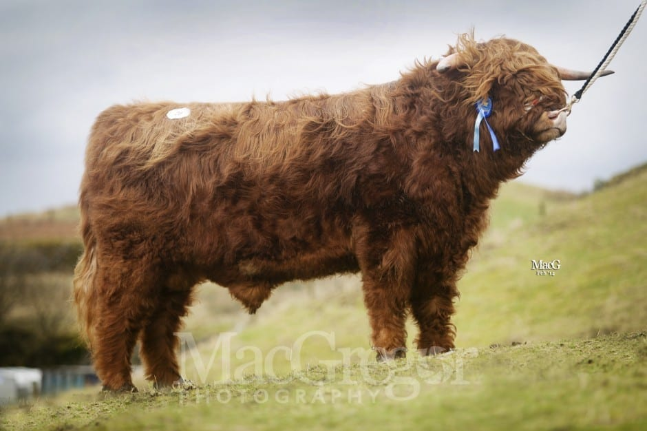 p 20 Jacob 2nd of Benmore 3800gns