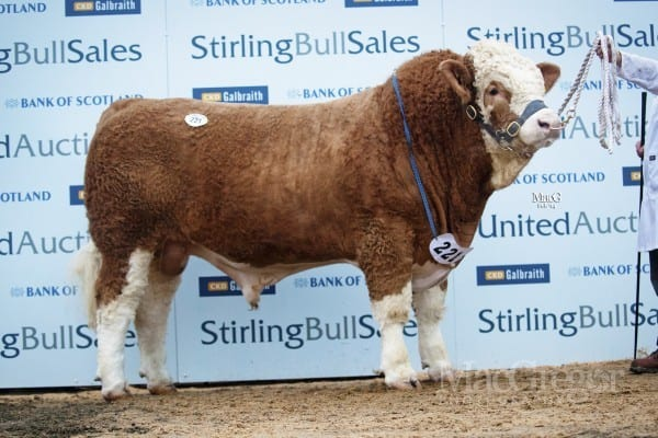 Lot 221 Corskie Data, sold for 9500gns to Elsick Estate, Newtonhill, Stonehaven