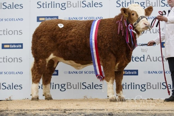 Lot 29 Drumacritten Delia, sold for 4000gns to R&M Hamilton, Mains Of Blairmore, Huntly