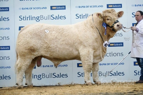 Lot 424, Maerdy Heartthrob, sold for 26,000gns to RM Adam, Newhouse, Glamis; WP Bruce, Balmyle, Meigle; JHC Campbell, Thrunton, Alnwick