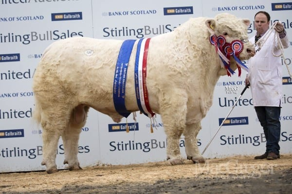 Lot 426, Maerdy Hasse, sold for 25,000gnso WR Baillie, Biggings, Orkney