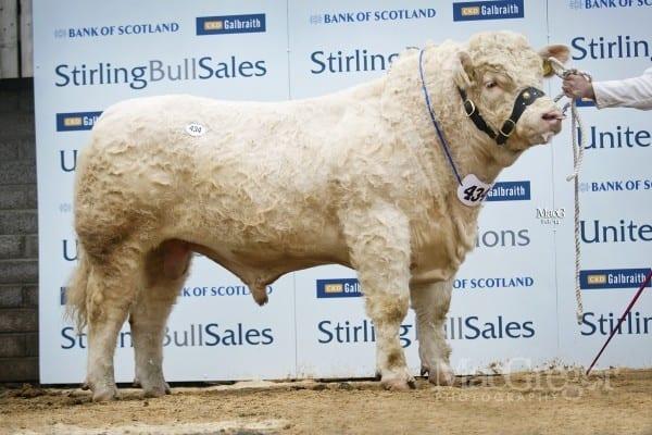 Lot 434, Edenhurst Heritage, sold for 10,000gns to CG Greig Farms Ltd, Pitlochie, Fife