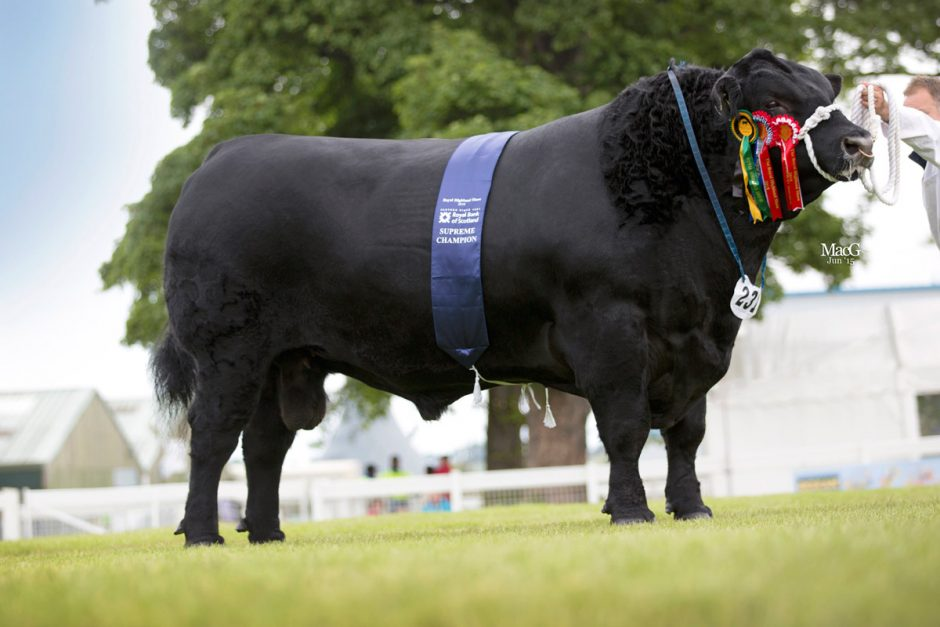 Royal Highland Show Cattle Champions Macgregor Photography
