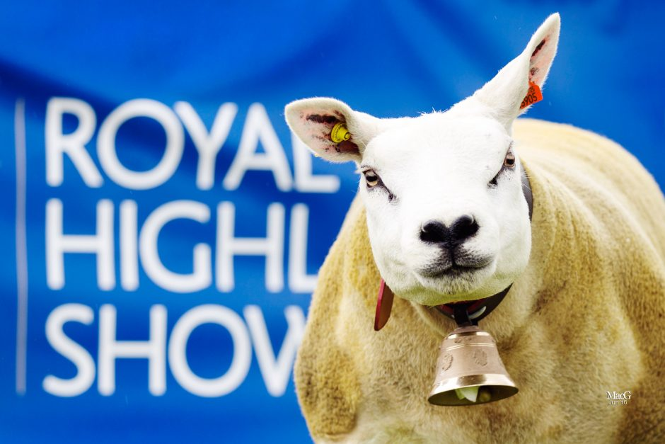 Royal Highland Show '16 - Sheep Champions