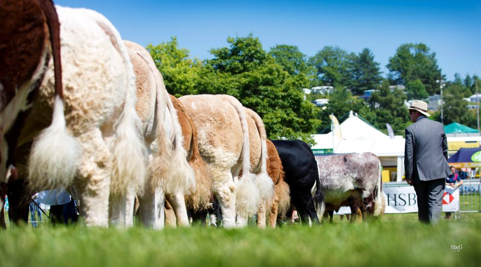 Royal Welsh Show 2016