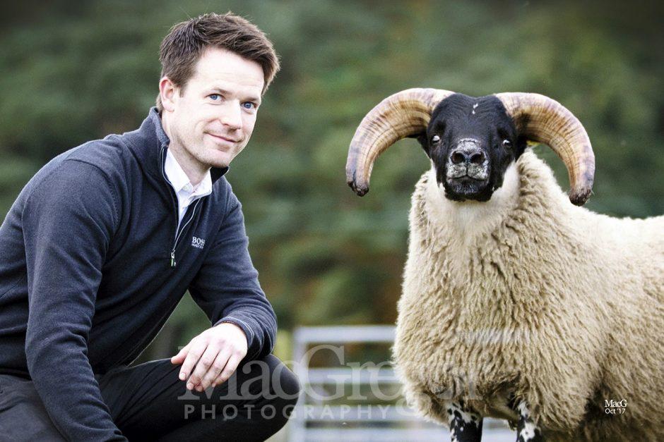 Blackface Lambs - Lanark