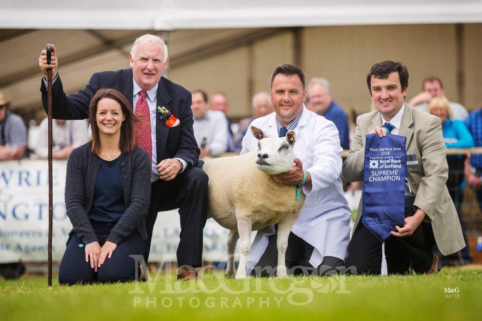 Royal Highland Show '18 - Sheep Champions