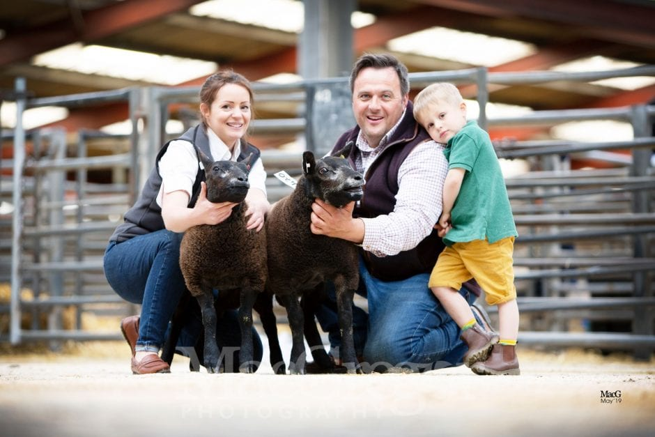 Carlisle - Blue Texel Spring Spectacular & The Babes Sale