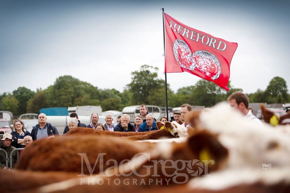 Tullamore - Hereford
